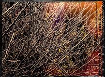PL_1010165_edit_Frozen_Flowers.jpg
