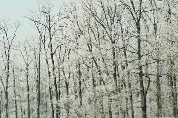 02 Iced Fields 035.jpg