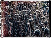 PL_1010055_edit_Frozen_Flowers.jpg