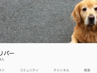 【メディア掲載】YouTubeチャネルゴールデンレトリバー 2月22日