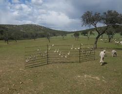 Canción de la lana (The wool song)