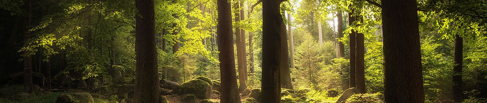 forest-2541928_1920.jpg