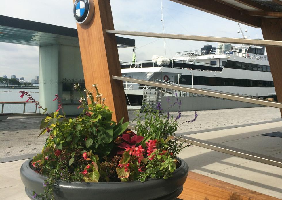 BMW - Solis EV