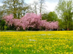 Compton Green in Spring