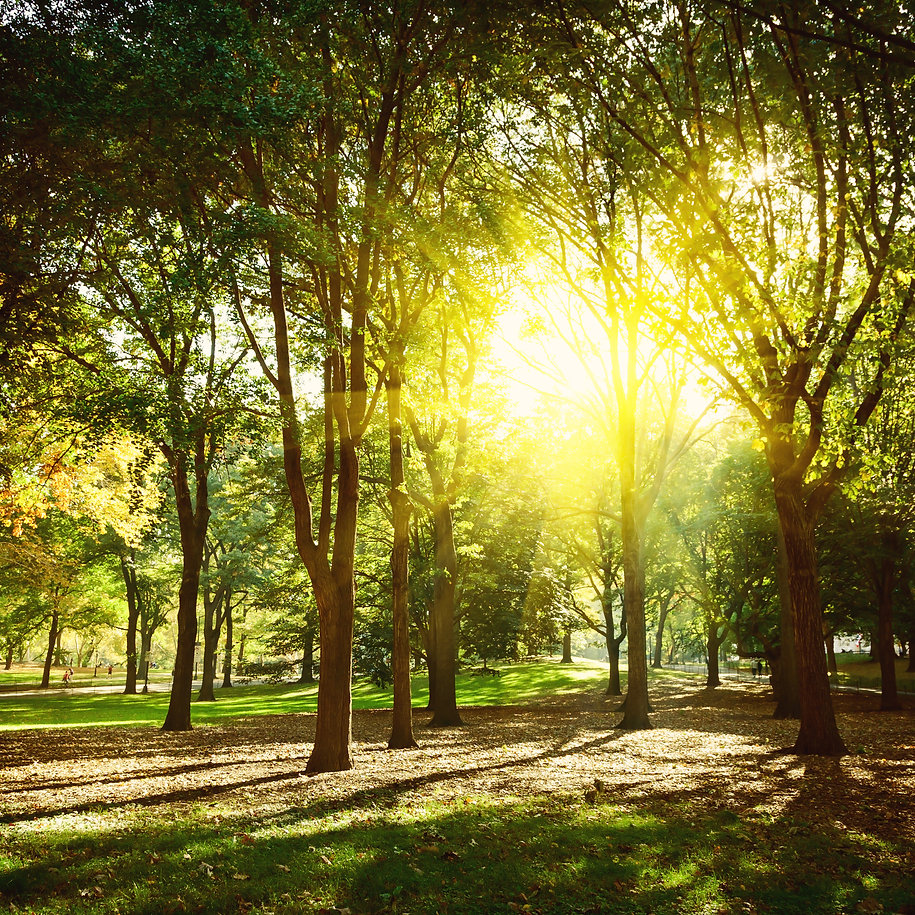 Trees in Central Park New York, USA..jpg