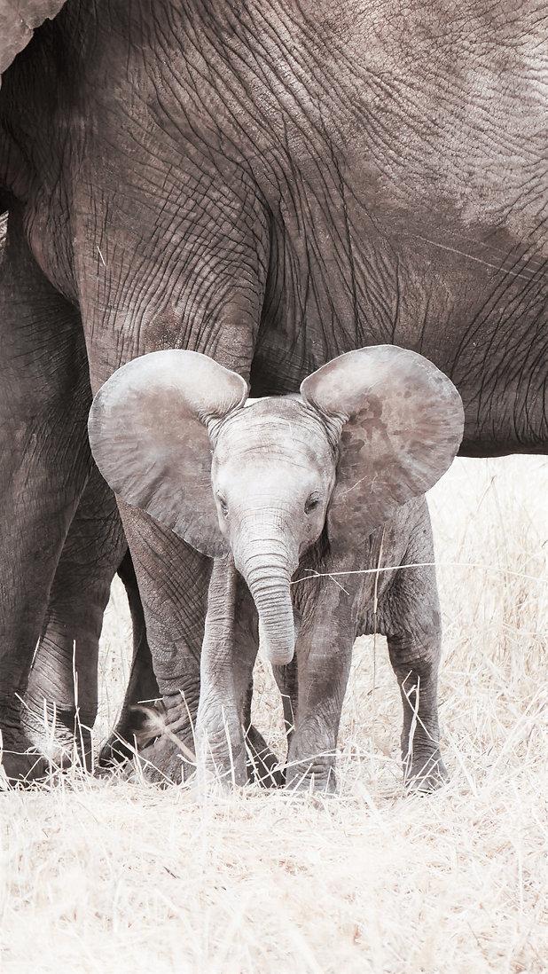 baby elephant for website (1).jpg