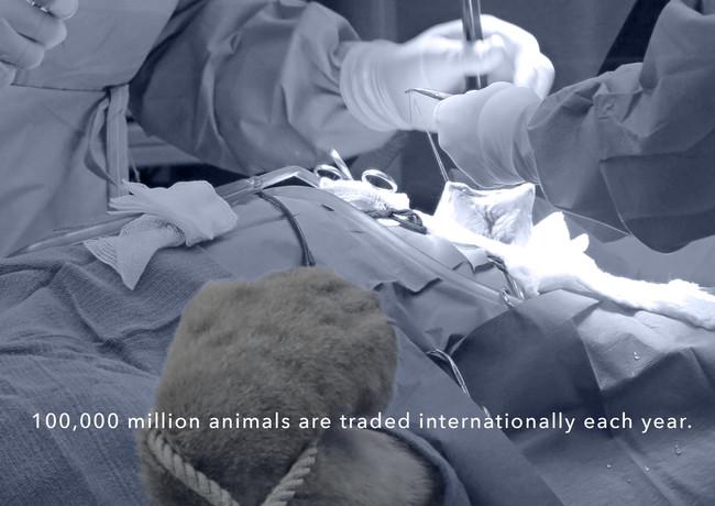 Lion in a wildlife hospital.jpg