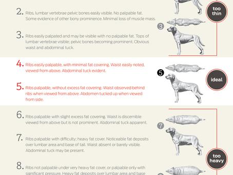 Maximize Your Dog's Food Motivation: Part 1