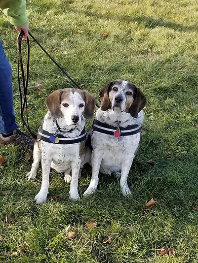dog training chicago area
