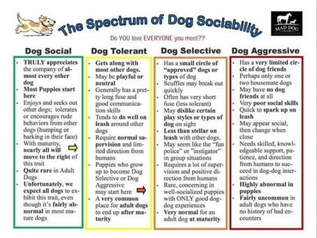 Your dog needs you, not other dogs