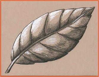 Virtual Leaf.jpeg