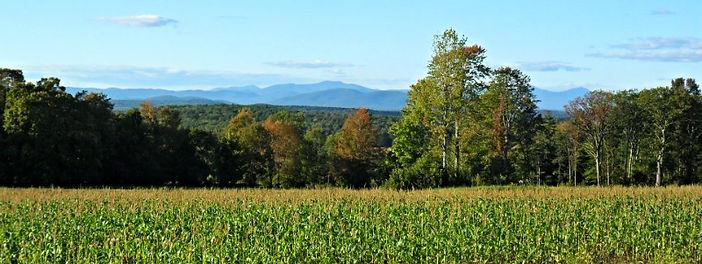 Timber Hill Farm - Corn Growing in Fields
