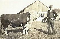 Timber Hill Farm - Rand Cow