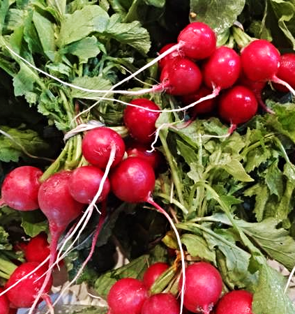 Timber Hill Farm - Fresh Radishes