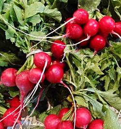 Timber Hill Farm - Fresh Radishes