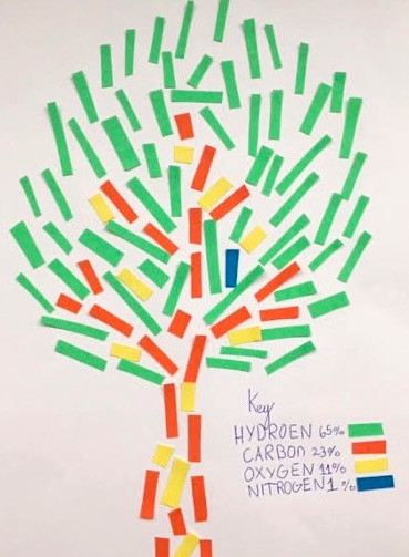 Paulina's Tree