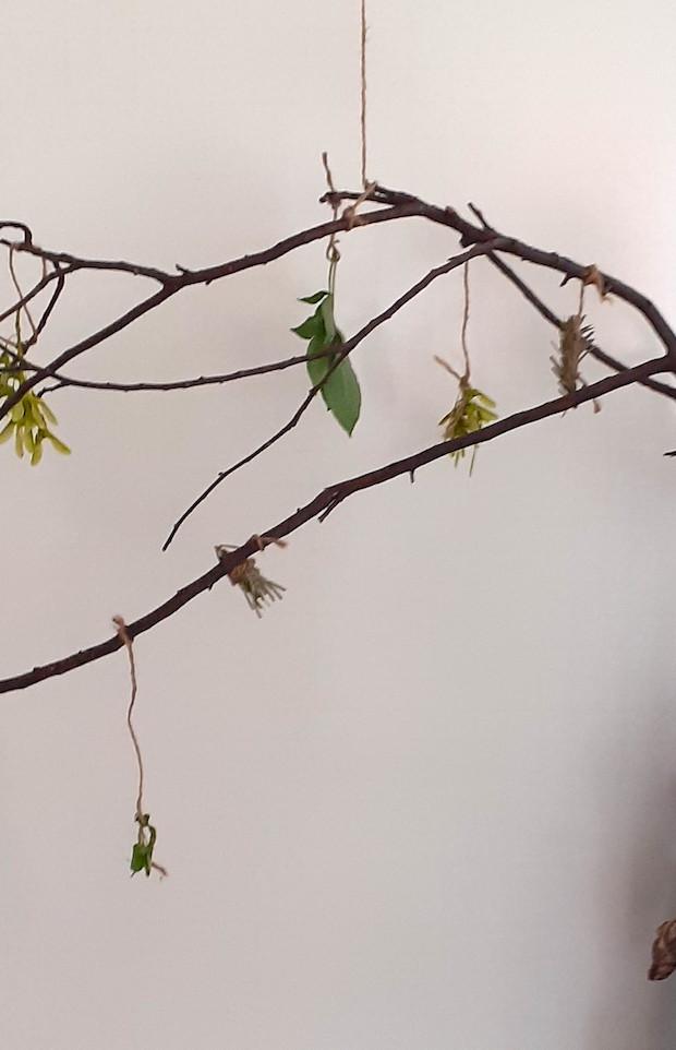 Tapiwa's Atom Tree