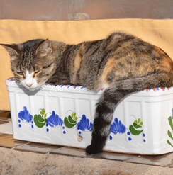 Mama cat in flower pot.png
