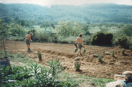 1995 - panting the first aloe veras.