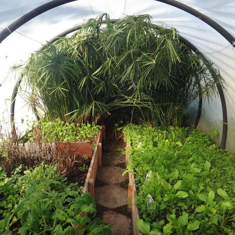 The mint garden