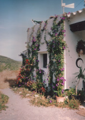 1994 - some greenery