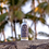 Thumbnail: Gold Sands Tanning Oil 100ml - The Coconut Bee