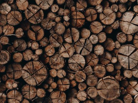 Bioplastica ottenuta dagli scarti del legno: un'alternativa sostenibile alla plastica tradizionale