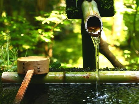Il bambù: un esempio di efficienza naturale