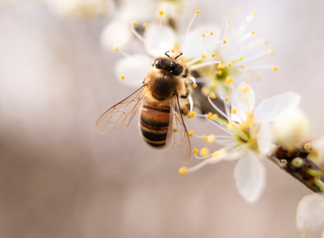Beeopak: ecco la pellicola alimentare ecologica