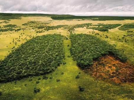 L'ONU definisce fallimentare il tentativo di arrestare la perdita degli habitat naturali
