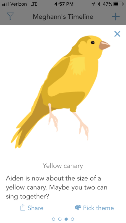 A Wee Little Canary!