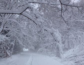 ついに始まった雪のある暮らし・・・