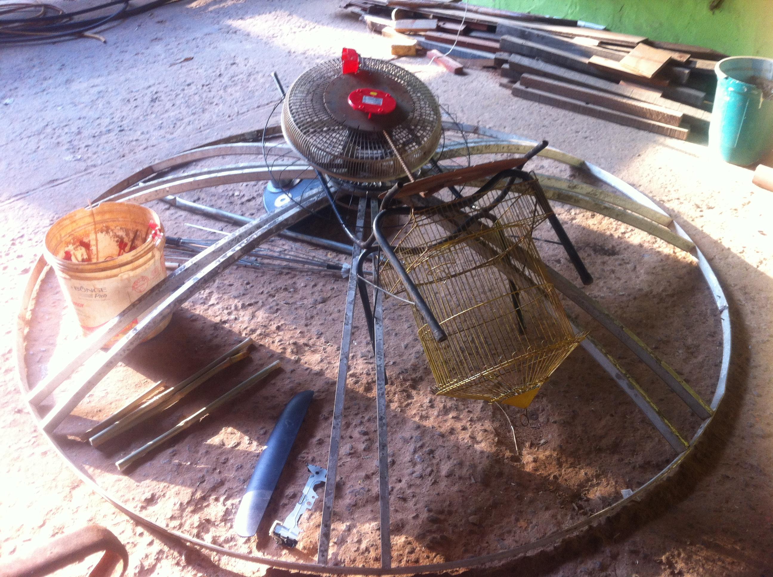 aranha-formiga nascendo