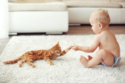 Child and animal safe products used