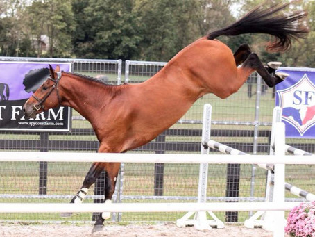 June 13-14th Free Jump Clinic and Jumper Schooling Show