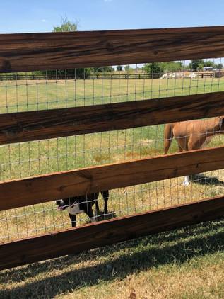 Dark Brown, Cedar Split RailFence