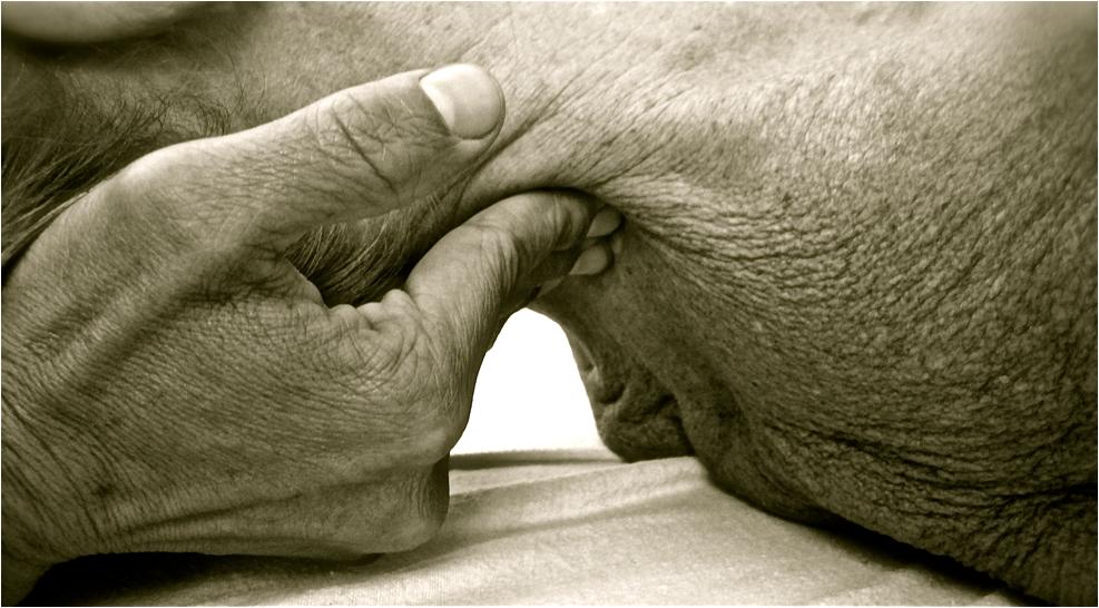 Thérapie Sacro Crânienne