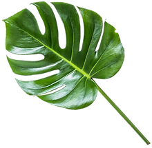 leaf_1_edited.png