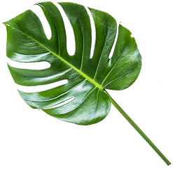 leaf_1_edited.png