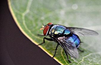 housefly-3683002_1280.jpg