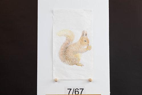 Squirrel - Morgan Wery