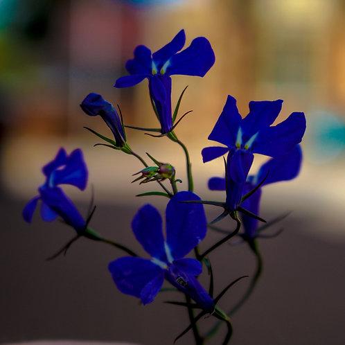 Blue Flower - Hayley Fuller