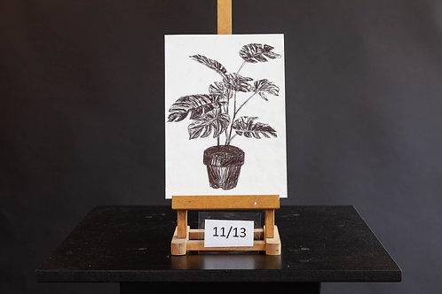 Monstera Plant - Jasmine McMullen