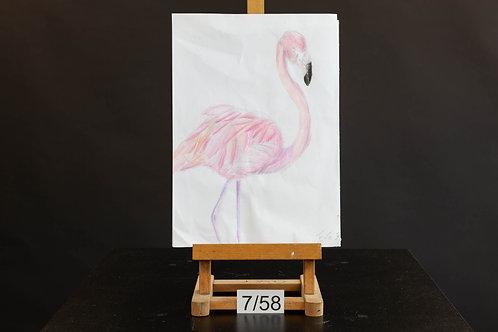 Flamingo - Eva Flynn