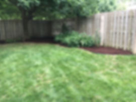 Mulch is a great option around trees to avoid mowing over and damaging tree roots