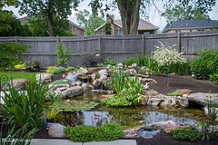 Ponds add life, birds, frogs, and plants creating a living waterscape ecosystem in your Omaha landscaping.