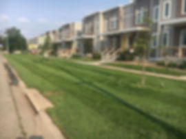 Results from years of our 6-step fertilizing and weed control program for a townhome in Lincoln, NE.