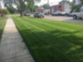 Thick, healthy, and green grass after our 6-step fertilizing program in Lincoln, NE.