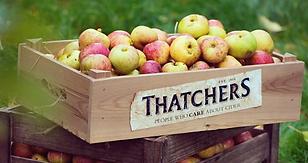 Thatchers-Cider-Myrtle-Farm-Somerset.png