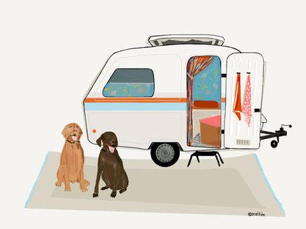 Caravan dogs - 1.jpeg